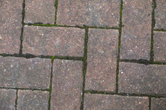 Block paving with green moss growing Royalty Free Stock Photography