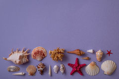 Block of seashells and coral Royalty Free Stock Photography