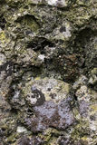 Block of stone covered with lichens Royalty Free Stock Image