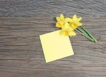 Block von gelben Beitrags-Anmerkungen und von frischer Narzissen-Blume Lizenzfreie Stockbilder