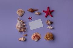 Block von Muscheln und von Gutschein auf purpurrotem Hintergrund Stockbild