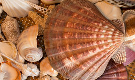 Block von Seashells Stockfoto