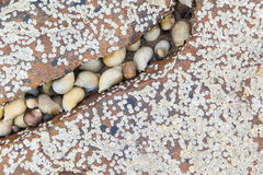 Block von Seashells Lizenzfreie Stockfotografie