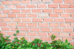 Block wall wallpaper Stock Photos