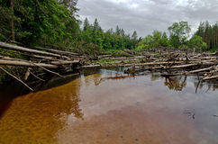 Blockage on the Lukh river (Russia) Stock Photography