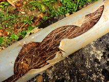 Blocked drainage pipe Stock Images