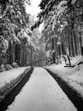Blocked forest road in winter Stock Photo