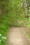 Blocked Path. Broken branch blocking a well established path stock image