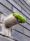 Blocked Pipe. Moss growing inside drainage outlet pipe Stock Photos