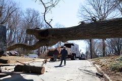 Blockera för träd Royaltyfri Fotografi