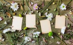 Blocket ut för ark för anteckningsboken för sidan för landet för den bästa sikten för bakgrund för gröna rosa blommor spricker de arkivbilder