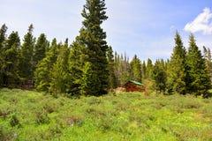 Blockhaus in einem Kiefernholz-Wald mit Wildflowers auf Sunny Day Lizenzfreie Stockfotografie