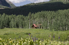 Blockhaus-Miete im Wald Stockbild