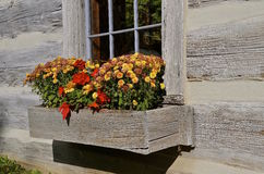 Blockhausblume Blumenkasten Lizenzfreies Stockfoto