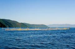 Blockierfischen Stockbilder