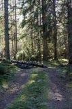 Blockierter Waldweg Lizenzfreies Stockbild