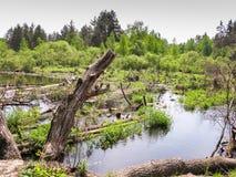 Blockierung auf dem Fluss, Kiefernstämme im Wasser überwältigt mit Gras Lizenzfreies Stockfoto
