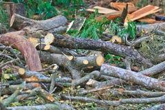 Blockwindenmann schneidet Holz Lizenzfreie Stockbilder