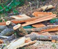 Blockwindenmann schneidet Holz Lizenzfreies Stockbild