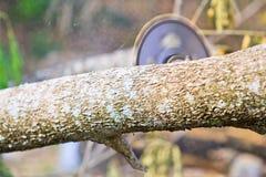 Blockwindenmann schneidet Holz Stockbild