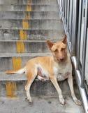 Bloco de cães dispersos Foto de Stock