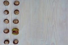 Bloco de 10 castanhas europeias Fotos de Stock Royalty Free