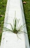 Bloco de cimento com a grama que cresce fora dela Fotografia de Stock