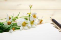 Bloco de notas com a flor do lápis e da grama Foto de Stock