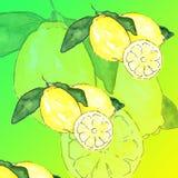 Bloco de papel de Digitas do verão: 'verão colorido do papel da melancia da limonada do limão do abacaxi do fundo dos frutos trop ilustração royalty free