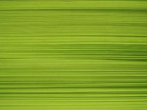 Bloco de papel verde Foto de Stock