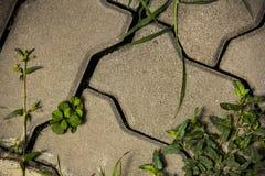Bloco do tijolo Imagem de Stock