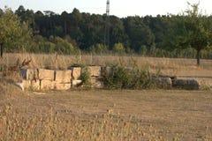 Blocos drystone áspero-desbastados decorativos empilhados em um outro para criar uma parede de retenção com a grama que cresce at fotografia de stock
