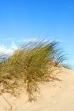 Blocs d'herbe de mer Photographie stock