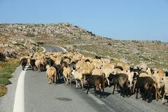 Blocus de Crète/moutons Photographie stock libre de droits