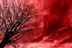 blod över tree Royaltyfria Foton