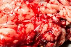 Blod fyllda organ tätt upp fotografering för bildbyråer