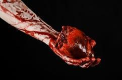 Blod- och allhelgonaaftontema: sönderriven blödande mänsklig hjärta för ruskig blodig handhåll som isoleras på svart bakgrund i s Royaltyfria Bilder