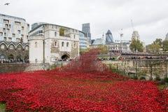 Blod sopade länder och hav av rött Royaltyfri Fotografi