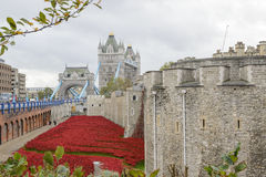 Blod sopade länder och hav av rött Royaltyfria Foton