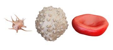 Blodceller erythrocyte, lymphocyte, trombocyt, tolkning 3D Royaltyfri Fotografi