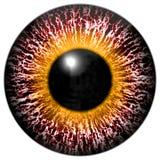 Blodigt rosa färg-öga av främlingen med den gula cirkeln runt om eleven Stock Illustrationer