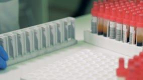 Blodprövkopior i rör får kontrollerade och insatta in i en palett arkivfilmer