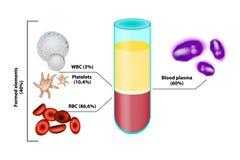 Blodsammansättning Infographics vektor illustrationer