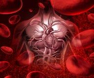 Blodsystem och cirkulation vektor illustrationer