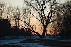Bloße Bäume Lizenzfreies Stockbild