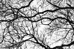 Bloße Zweige 2 Stockfotos