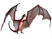 Bloed Dragon Scream Stock Foto's