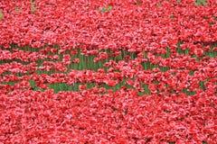 Bloed Geveegde Land en Overzees van Rode Papavers Royalty-vrije Stock Afbeeldingen