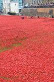 Bloed Geveegde Land en Overzees van Rode Papavers Royalty-vrije Stock Fotografie
