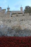 Bloed Geveegde Land en Overzees van Rode Papavers Stock Foto